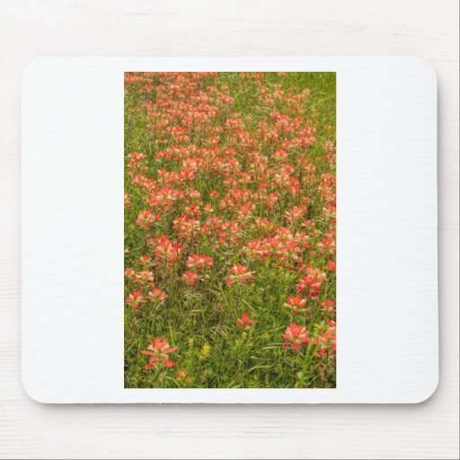 Texas Indian Paintbrush Wildflowers Mouse Pad