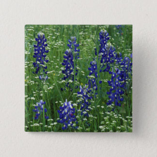 Texas, Lake Buchanan. Texas Bluebonnet and Wild 15 Cm Square Badge