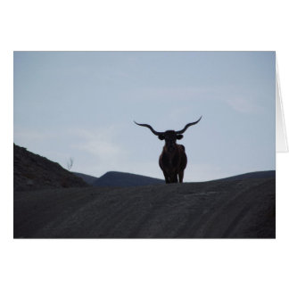 Texas Longhorn Card