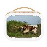 Texas Longhorn lunchbox