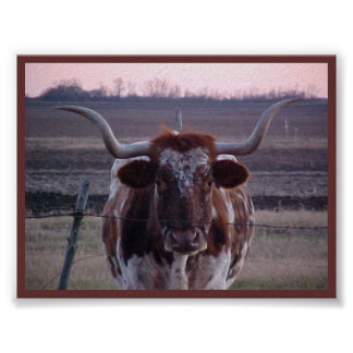 Texas Longhorn Print