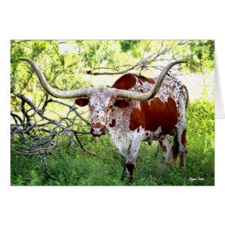 Texas Longhorn Steer Card