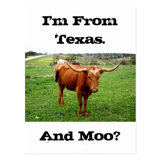 Texas Longhorn With Funny Texas Saying Postcard