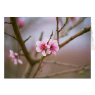 Texas Peach Blossoms Card