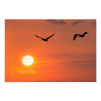 Texas Pelicans at Sunset Photo Print