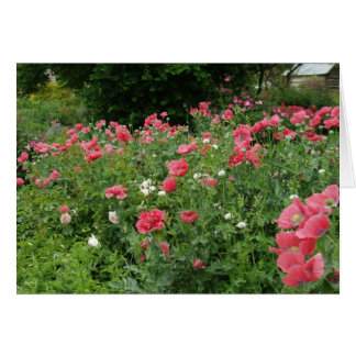 Texas Poppies Card