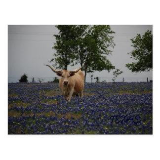 Texas Royalty Postcard