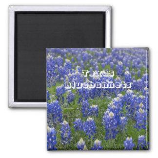 Texas State Flower Bluebonnets Magnet