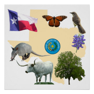 Texas State Symbols Poster