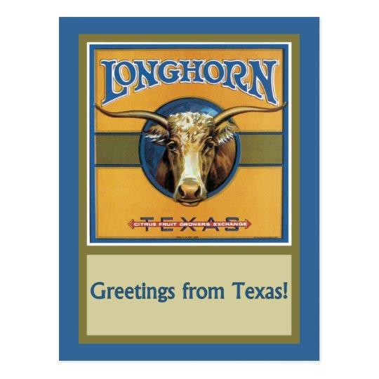 Texas Steer Longhorn Postcard