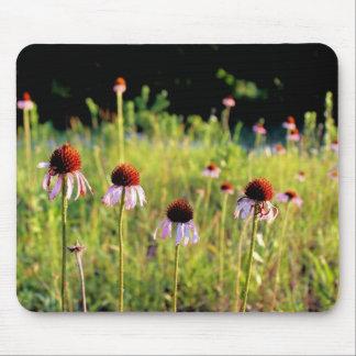 Texas Wildflowers - Coneflower - Mousepad