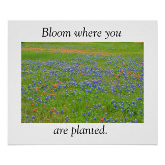 Texas Wildflowers Poster
