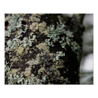 Texture and pattern of lichens on tree trunk poster