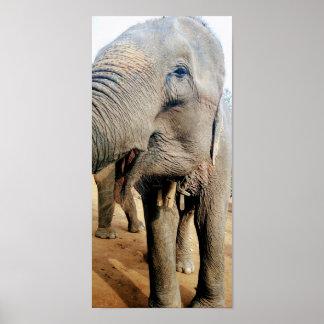 Thai Elephant Poster