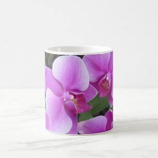 Thai Orchid display Coffee Mug