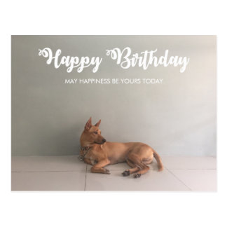 Thai Ridgeback Dog Happy Birthday Postcard