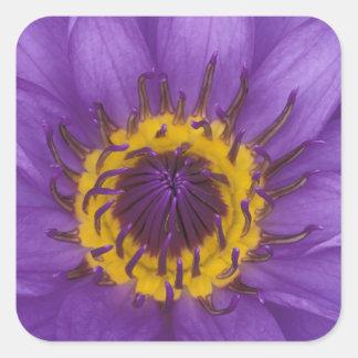 Thailand, Bangkok, Purple and yellow lotus Square Sticker