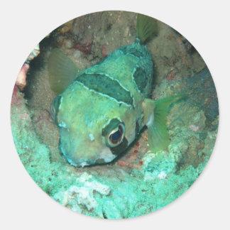 thailand fish round sticker