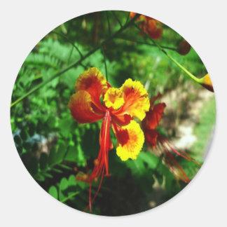 thailand flower stickers