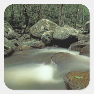 Thailand, Kohsamui Island, Rainforest landscape. Square Sticker