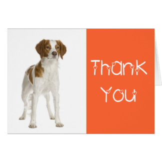 Thank You  Brittany Spaniel Puppy Dog Card