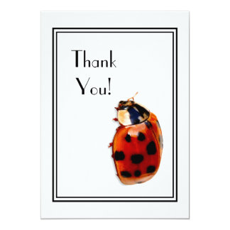 Thank You Chic Spotted Ladybug 13 Cm X 18 Cm Invitation Card