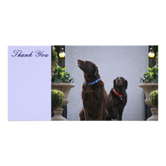 Thank You, Chocolate Labs Customised Photo Card