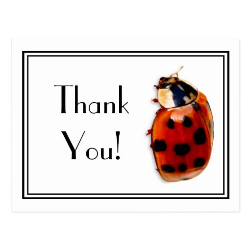 Thank You Cute And Classy Little Ladybug Post Cards