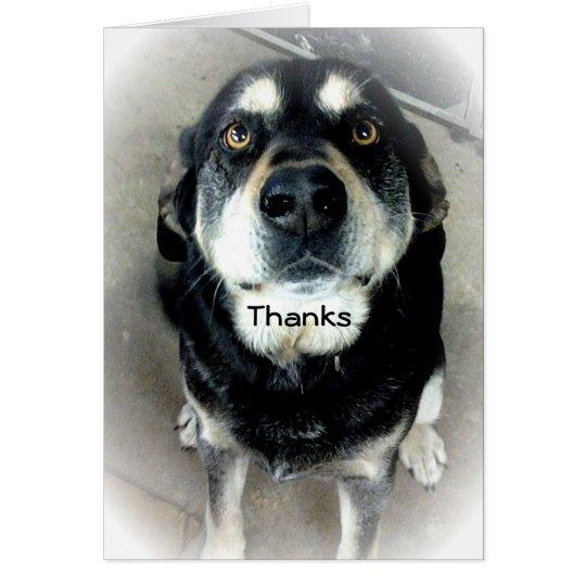 Thank You Dog Card