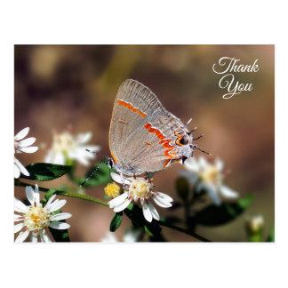 Thank You Dusky Blue Hairstreak Butterfly Postcard