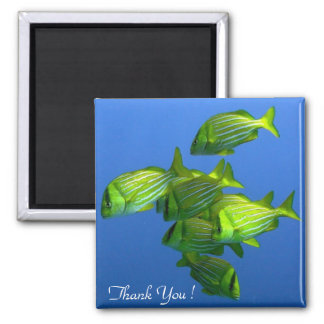 Thank You, Gold Fishes!, Square Magnet