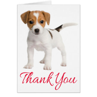 Thank You Jack Russell Terrier Puppy Dog Blank Card