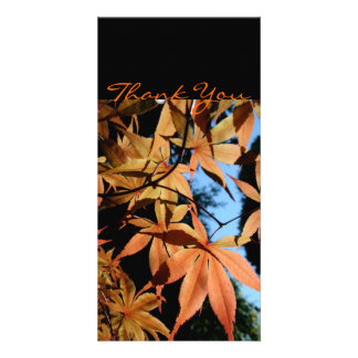 Thank you - Japanese maple - Custom Photo Card