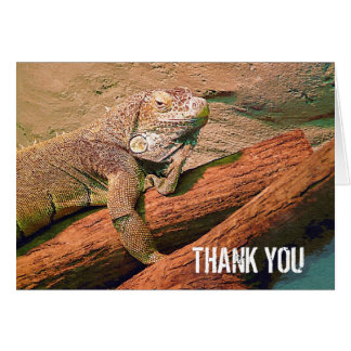 Thank You  - Lazy Lizard Card