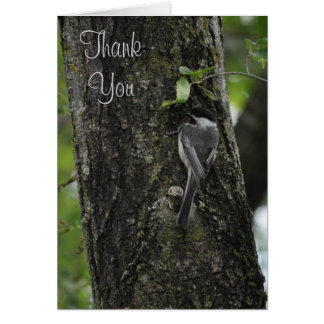 Thank You Little Birdie Cards by Janz