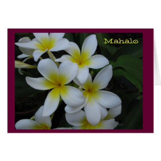 Thank you (Mahalo) card - white plumeria cascade