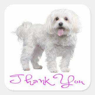Thank You Maltese Puppy Dog Sticker