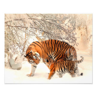 Thank you Mum Tiger and Cub Photograph