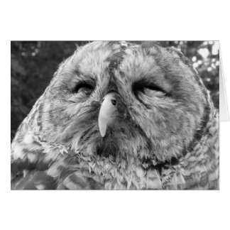 Thank You Note Card ~ Barred Owl
