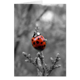 Thank You Note Card ~ Ladybug Greeting Card
