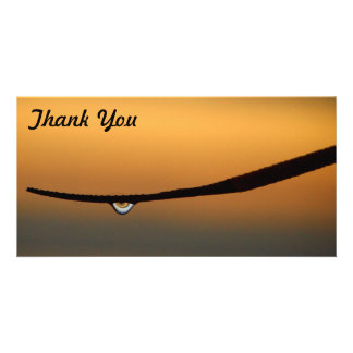 Thank You photo card - dewdrop at sunrise