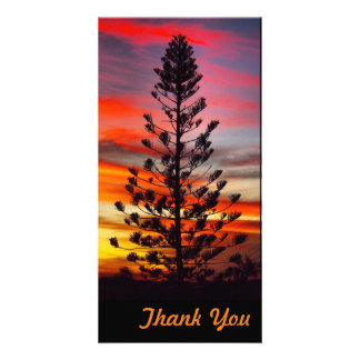 Thank You photo card - Emu Park sunset