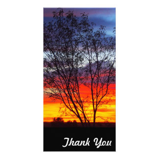 Thank You photo card - Julia Creek sunset silhouet