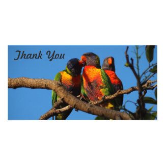 Thank You photo card - Rainbow Lorikeet