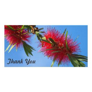 Thank You photo card - red bottlebrush flower