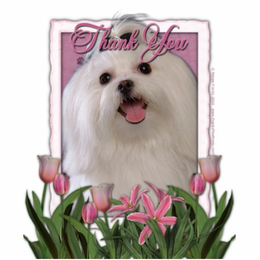 Thank You - Pink Tulips - Maltese Photo Sculpture
