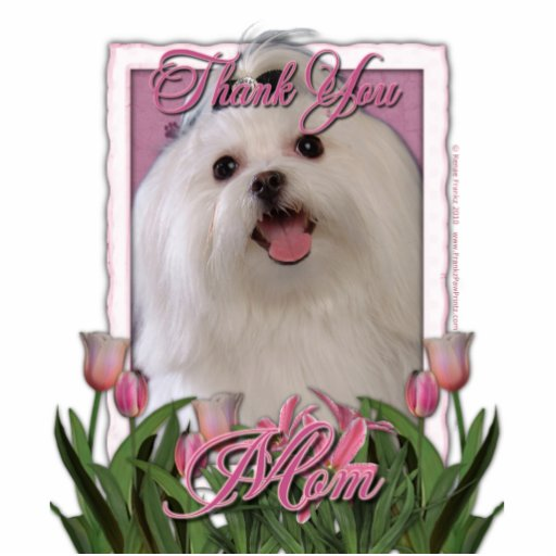 Thank You - Pink Tulips - Maltese Acrylic Cut Outs