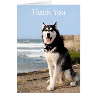 Thank  You Siberian Husky on Beach Greeting  Card