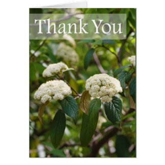 Thank You Spring Viburnum Floral Card