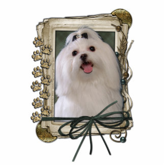 Thank You - Stone Paws - Maltese Cut Out